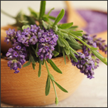 4 Facts About Lavender