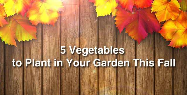 5 Vegetables to Plant in Your Garden This Fall
