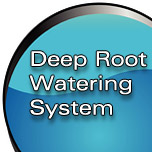 Deep Root Watering System Study