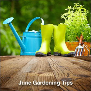 June Gardening Tips for the Midwest / Mountain Region