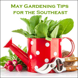 May gardening tips southeast