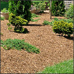 How to Choose the Right Mulch for Your Landscaping - Part 2