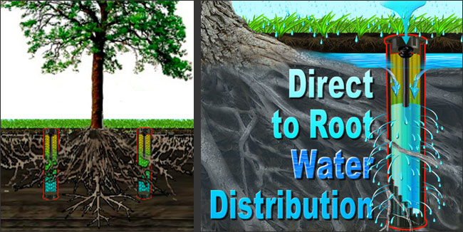 Why More People Are Installing Deep Root Watering Systems