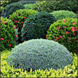 Why Your Shrubs Are Dying