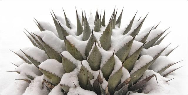 Cold deserts plants