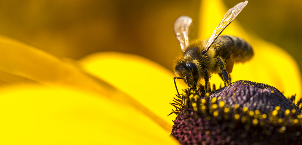 Aldi bans bee killing pesticides