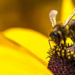 Aldi bans bee killing pesticides