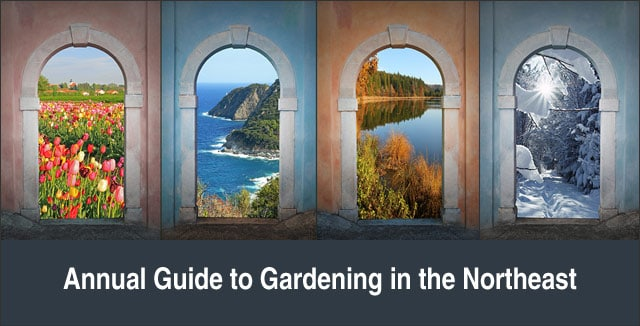 Annual Guide to Gardening in the Northeast