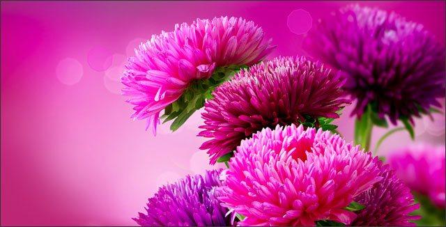 10 Top Fall Blooming Flowers