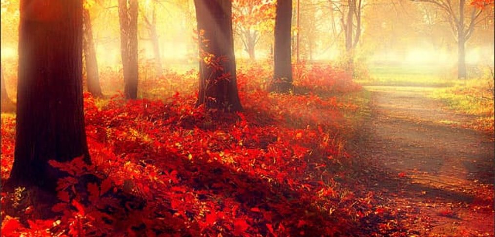 Trees in autumn depicting tree roots