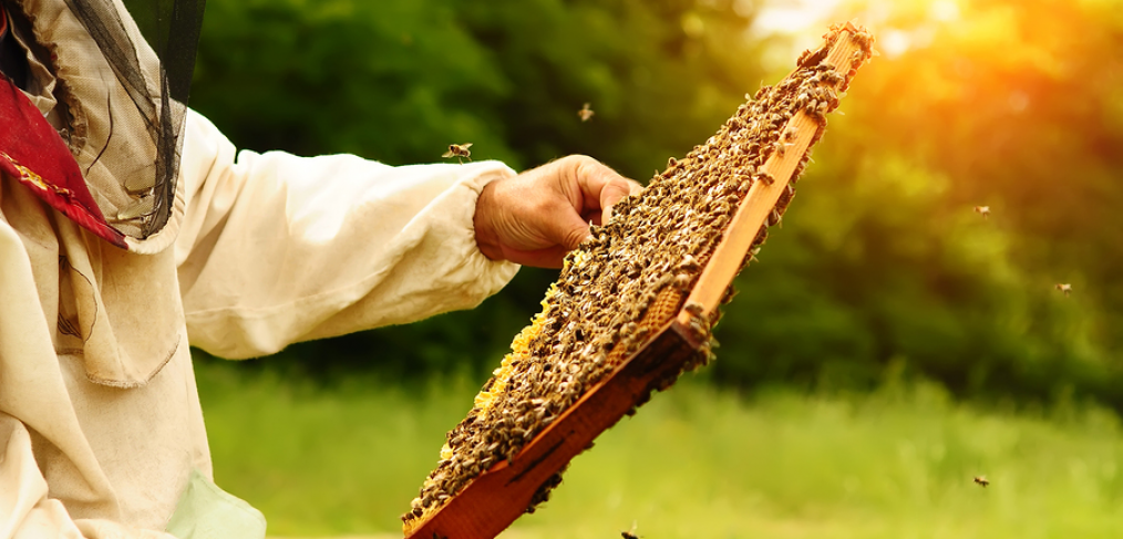 Pros and Cons of Backyard Beekeeping - Gardening Tips