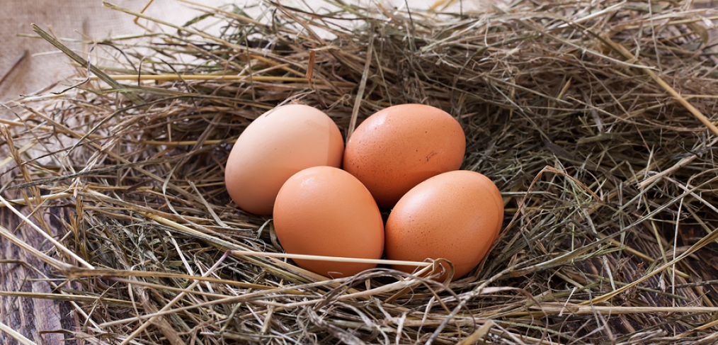 Fresh eggs depicting backyard chicken keeping