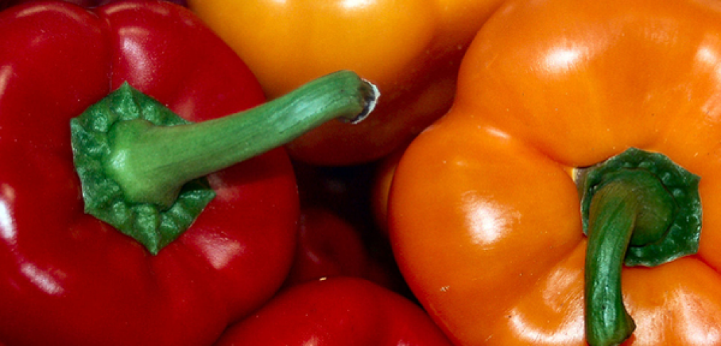 How to Grow Amazing Bell Peppers for Your Family