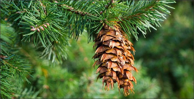 Best Trees to Plant for a Pacific Northwest Region's Backyard