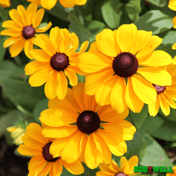 3 easy heat loving flowers to grow this summer Plants that love sun and heat