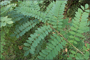 Weed Trees: How to Identify and Get Rid of Them - Gardening Tips