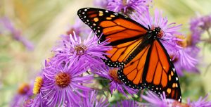 Plants that attract butterflies