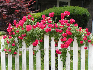 climbing roses - Deep Root Aeration Tubes | Rootwell