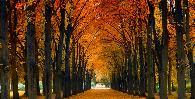 Trees depicting Common Tree Diseases