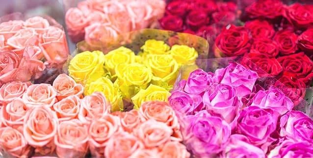 Cut flowers - roses