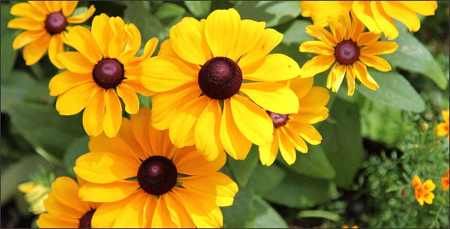 17 drought tolerant plants annuals and perennials 17 drought tolerant annuals and perennials mightylinksfo
