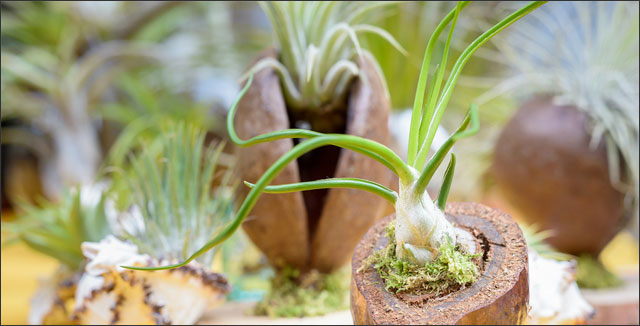 Exotic air plants