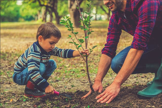 Boy and father planting tree depicting fast growing trees