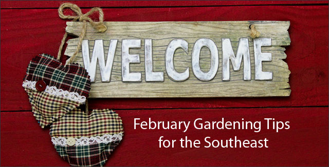 February Gardening Tips for the Southeast