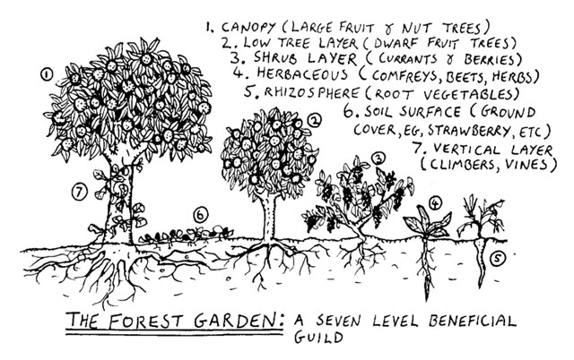 Food Forests Diagram