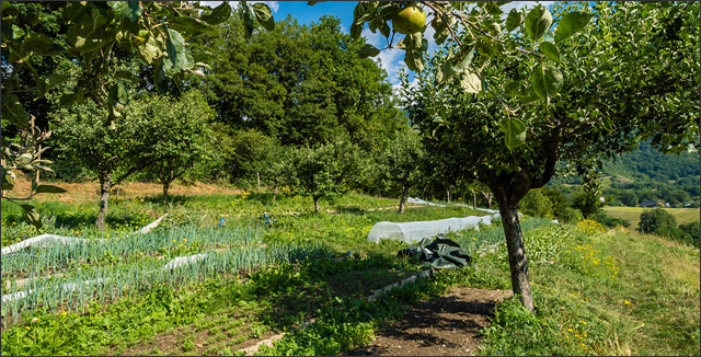 Food forests example