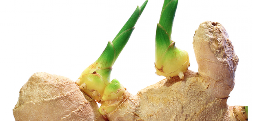How to Easily Grow Ginger in Your Backyard