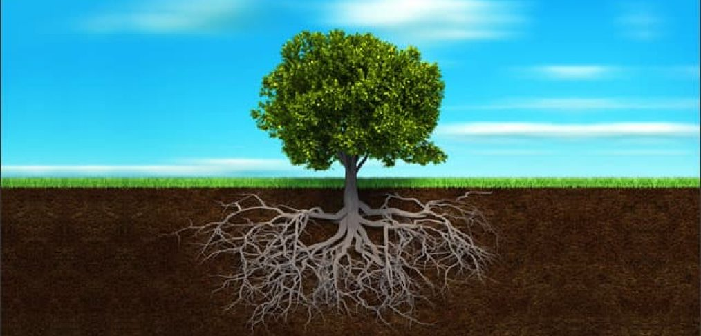 Tree and roots depicting how to grow trees in compacted soil