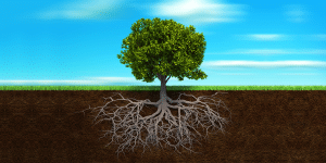 Deep Root Watering Trees - Rootwell Products