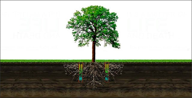 How to grow trees in sandy soil