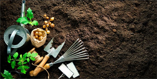 Garden tools and seeds depicting growing food