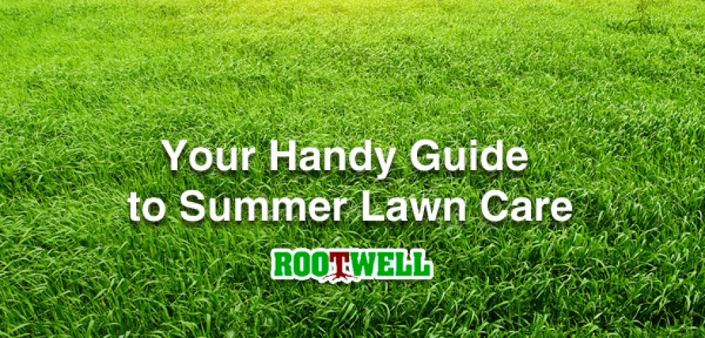 Your Handy Guide to Summer Lawn Care