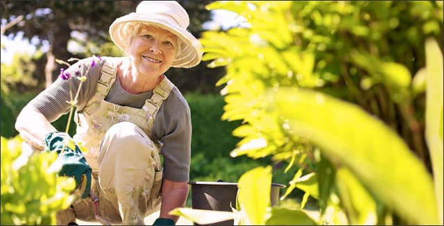 Elderly woman gardening depicting Horticultural Therapy