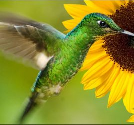 Attracting Pollinators and Pest-Eaters to Your Garden