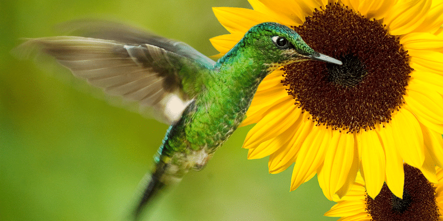 How To Attract Pollinators And Pest Eaters To Your Garden