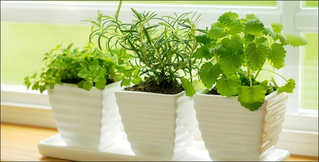 each tier can used that garden herb indoor in smallgardenideas planting for sgi herbs this different t pin isn cool planter be