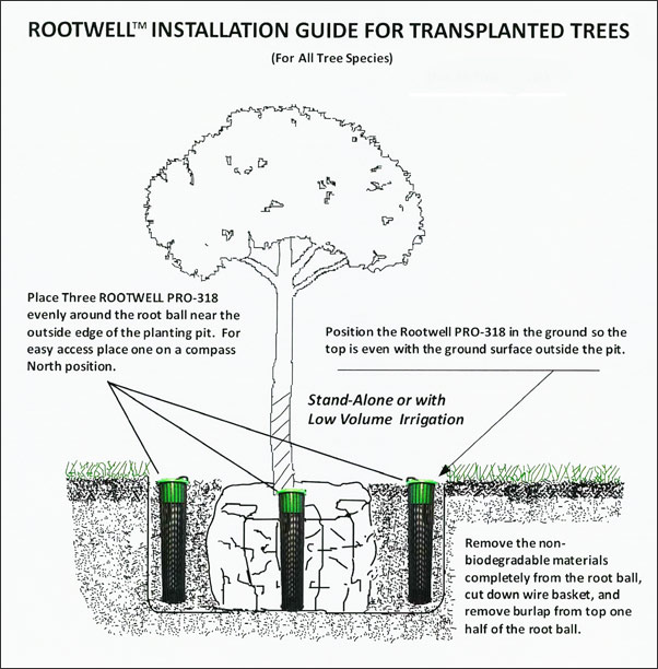 Rootwell's installation guide transplanted trees