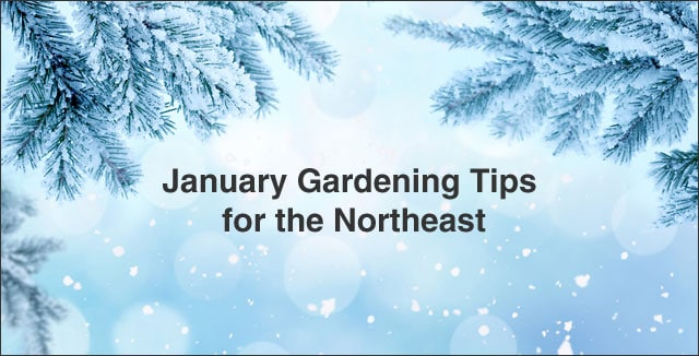 Image result for january gardening tips