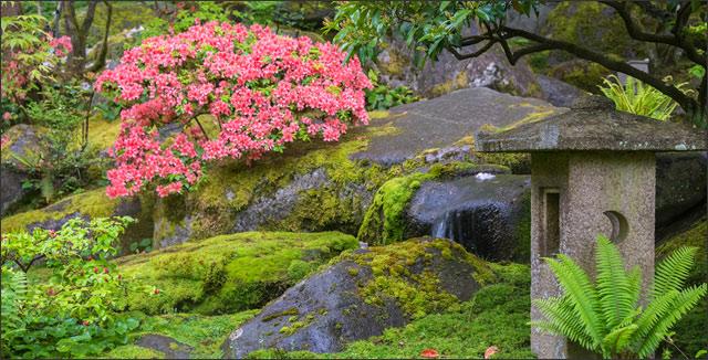 Japanese moss garden
