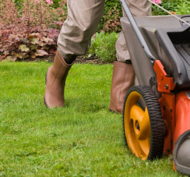 Lawn care strategies