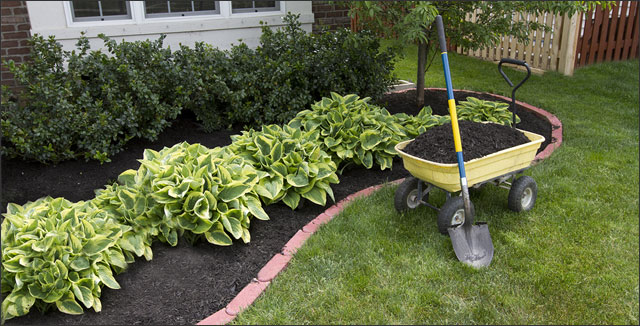 Hostas and mulch depicting How to Create a Low Maintenance Garden