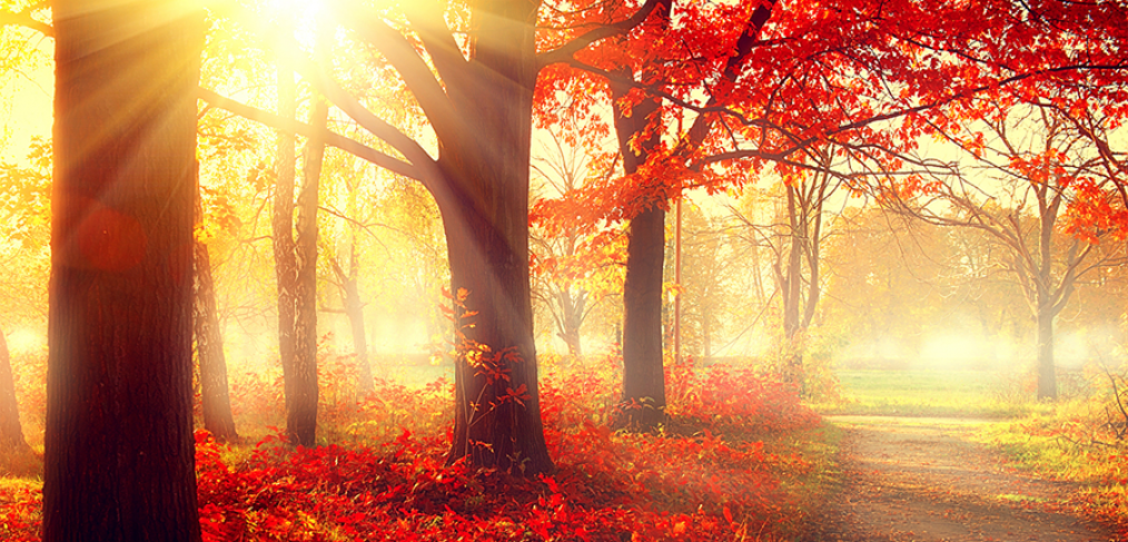 Midwest Fall Foliage
