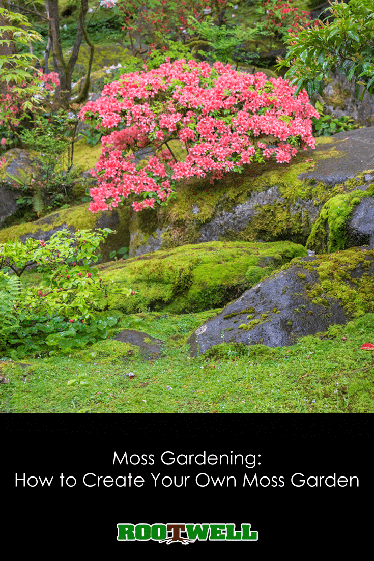 After That, However, Your Moss Garden Should Take Care Of Itself. It Will  Make Your Yard Into A Serene, Magical Place In Which To Rest.