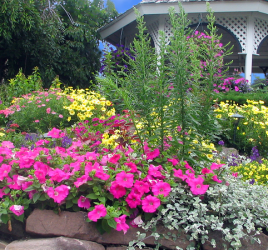 Plant Hardiness Zones: Top Tips for Home Gardeners
