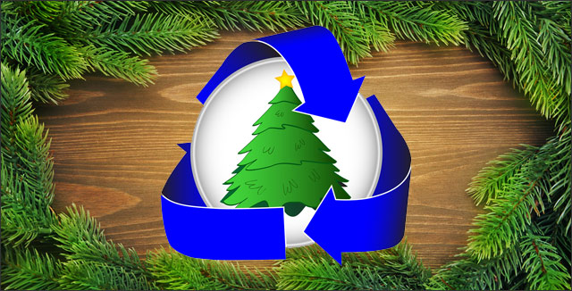 5 Ways to You Can Recycle Christmas Trees