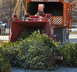Recycling Christmas trees
